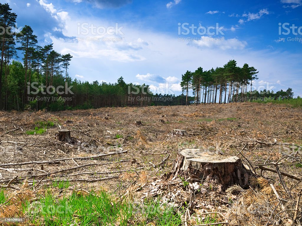 forest cut royalty-free stock photo