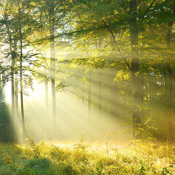 Forest dawn Beautiful autumn morning in the forest tranquil scene stock pictures, royalty-free photos & images