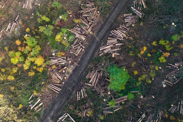Forest, deforestation area - aerial view stock photo