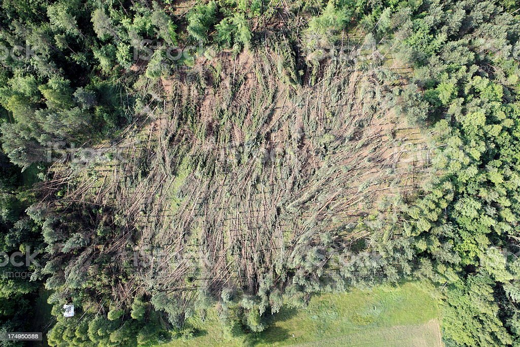 Forest destroyed by storms stock photo