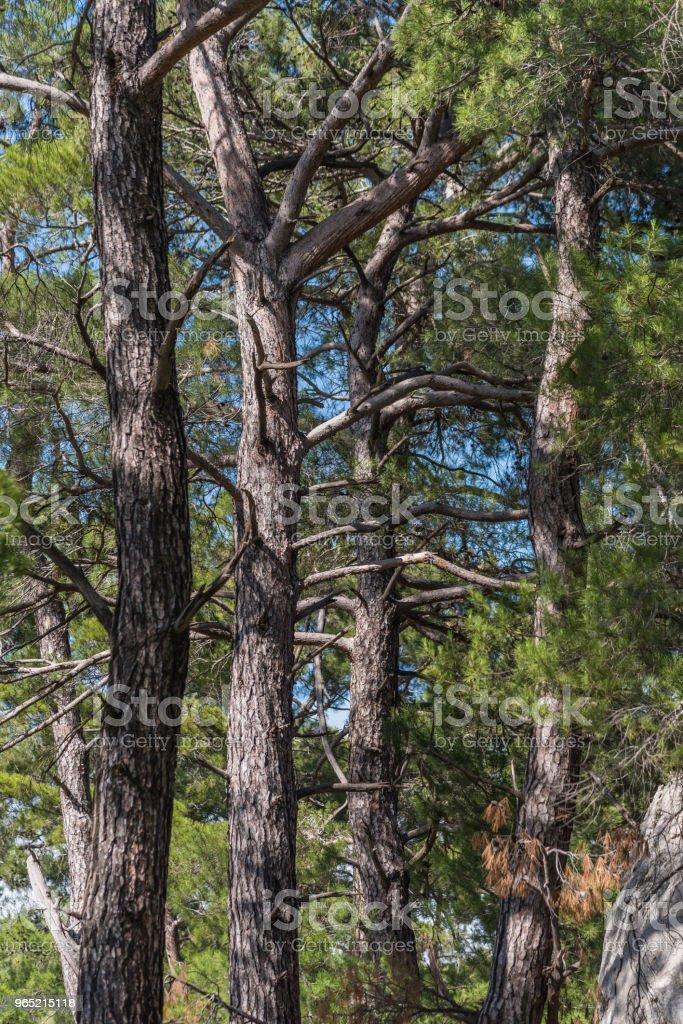 Forest Detail Shot zbiór zdjęć royalty-free