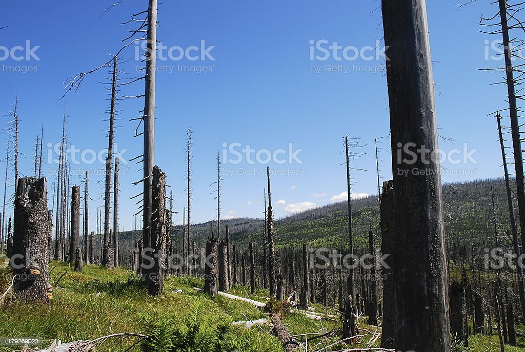 forest dieback II royalty-free stock photo