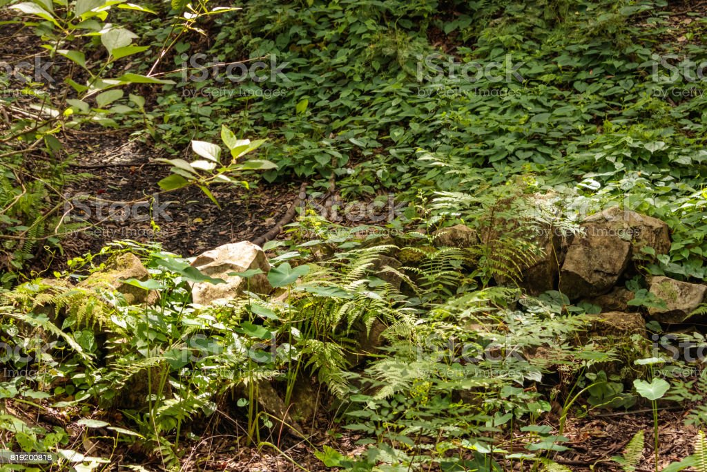 Forest ditch dry stream covered by wild plants stock photo