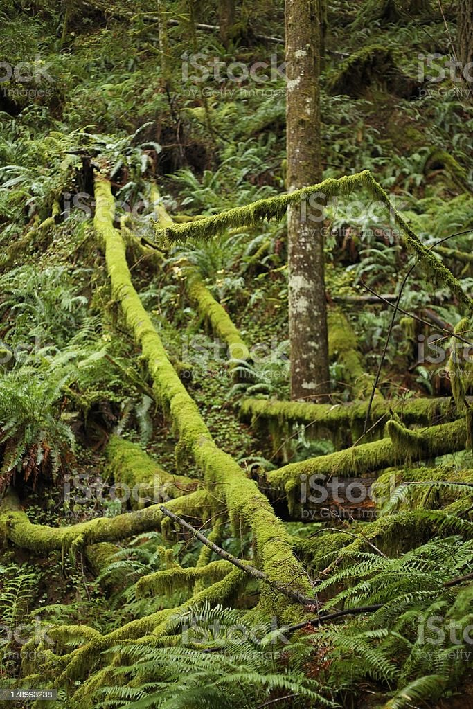 Forest Diversity royalty-free stock photo