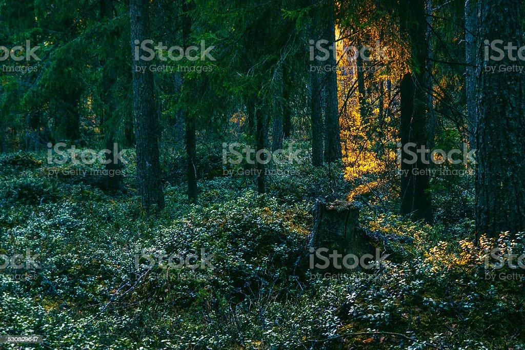 Forest door stock photo