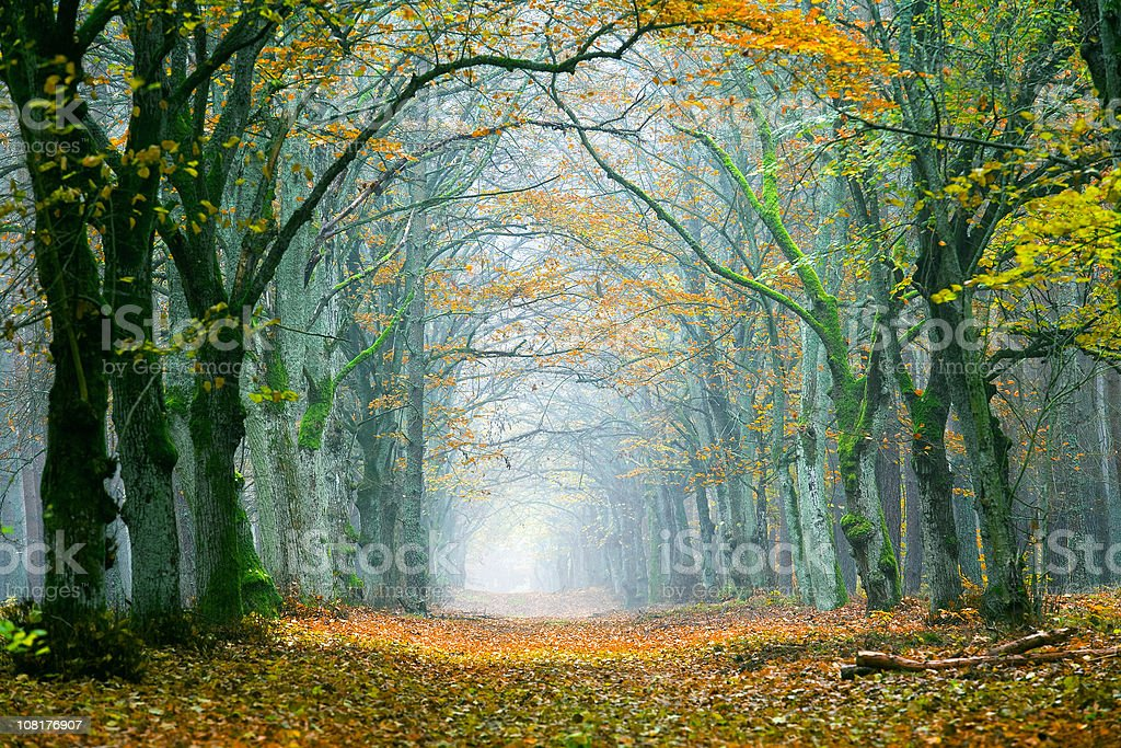 Forest During Autumn royalty-free stock photo