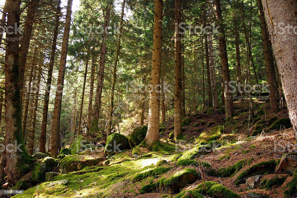 Forest during the day with fairy  royalty-free stock photo