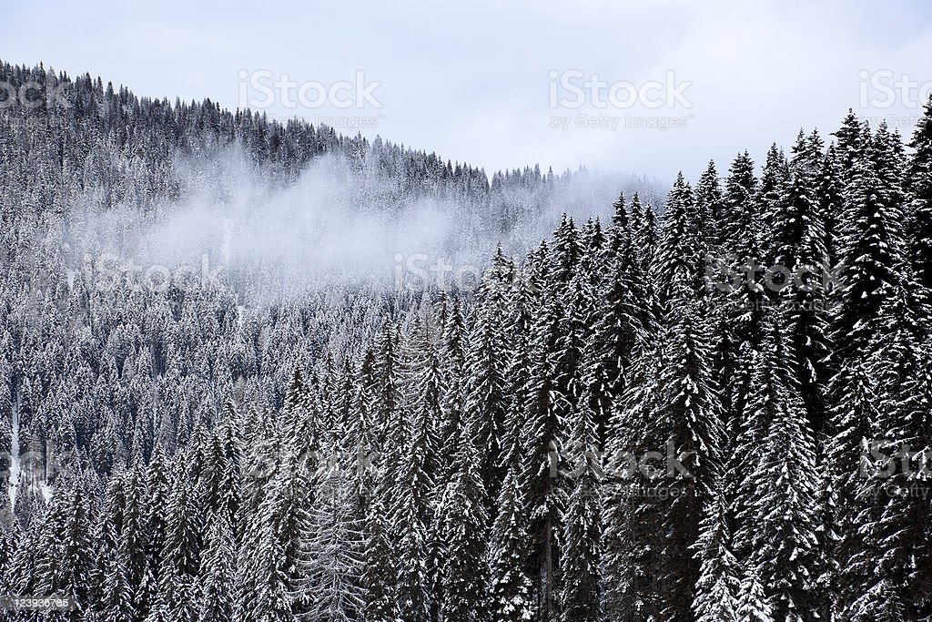 Forest during Winter with Clouds and Moody Sky royalty-free stock photo
