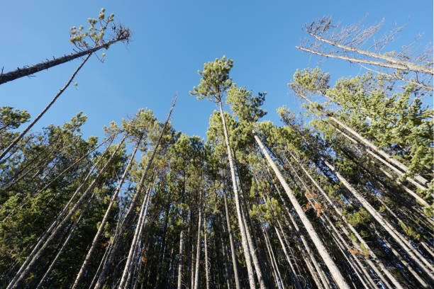 Bord de forêt dans les rocheuses canadiennes stock photo