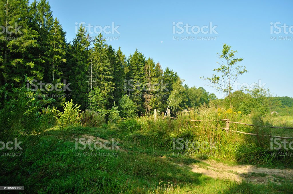forest edge stock photo
