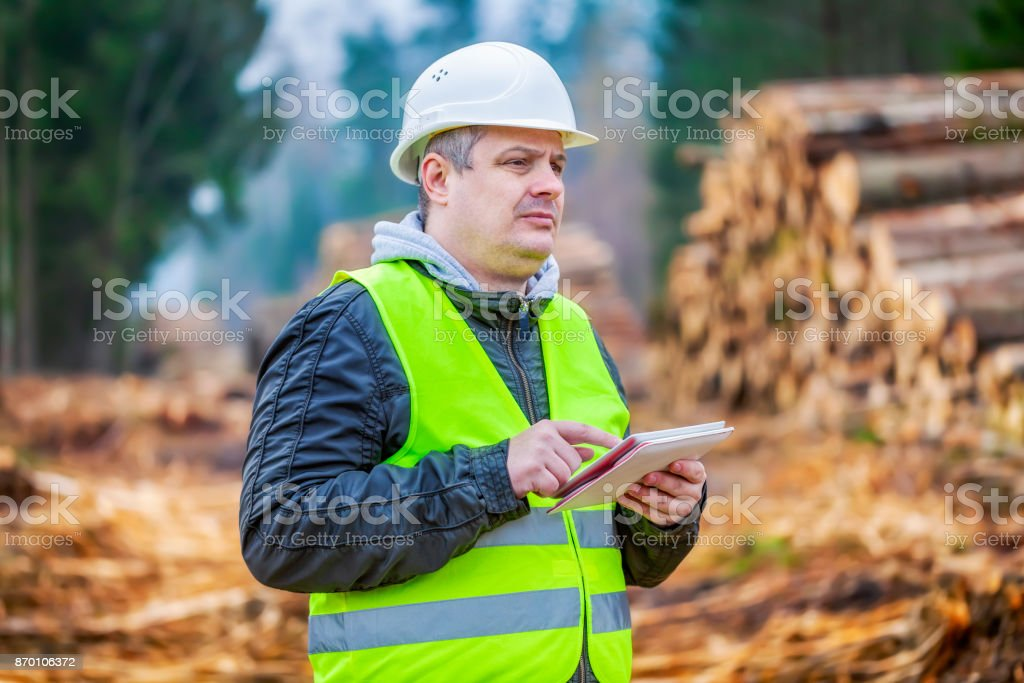 Forest engineer with tablet PC near piles of logs in forest stock photo