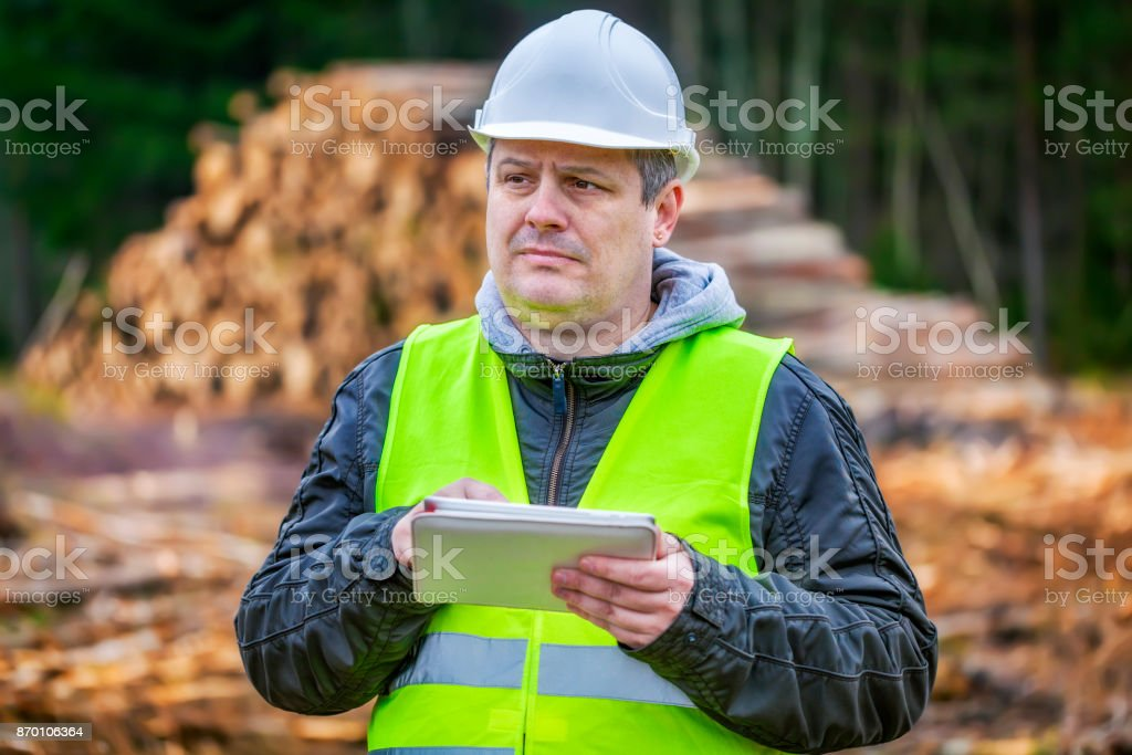 Forest engineer with tablet PC near piles of logs stock photo