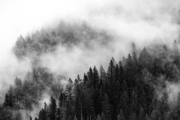 forest engulfed in fog - wybrzeże północno zachodnie pacyfiku zdjęcia i obrazy z banku zdjęć