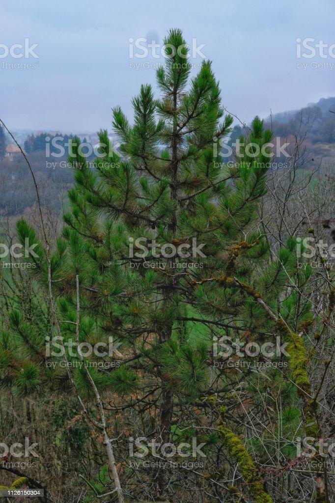 Environnement forestier - Photo