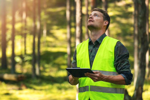forest evaluation and management - forestry engineer working with digital tablet in the woods stock photo
