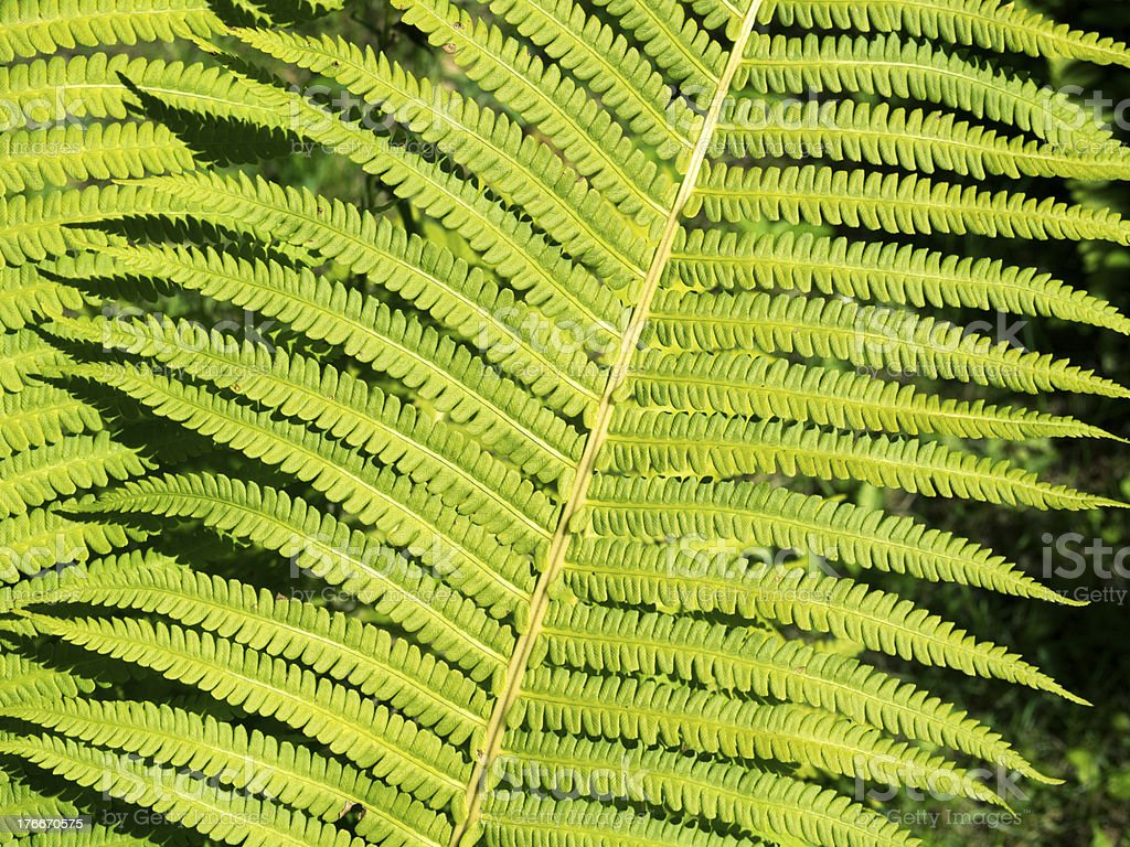 forest fern royalty-free stock photo
