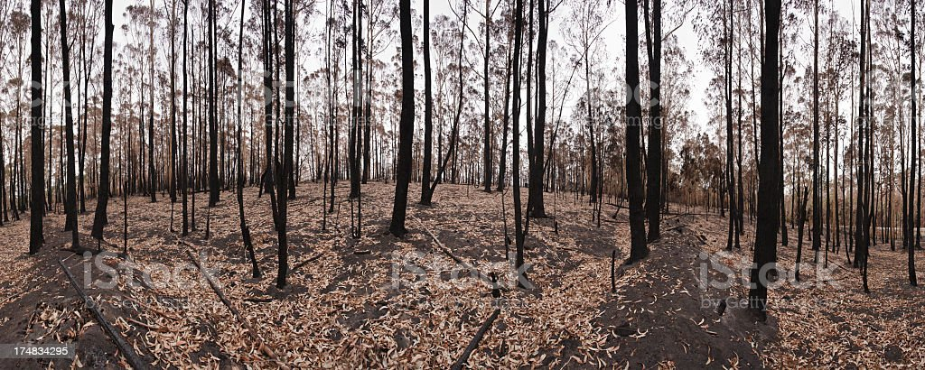 Forest Fire Aftermath royalty-free stock photo