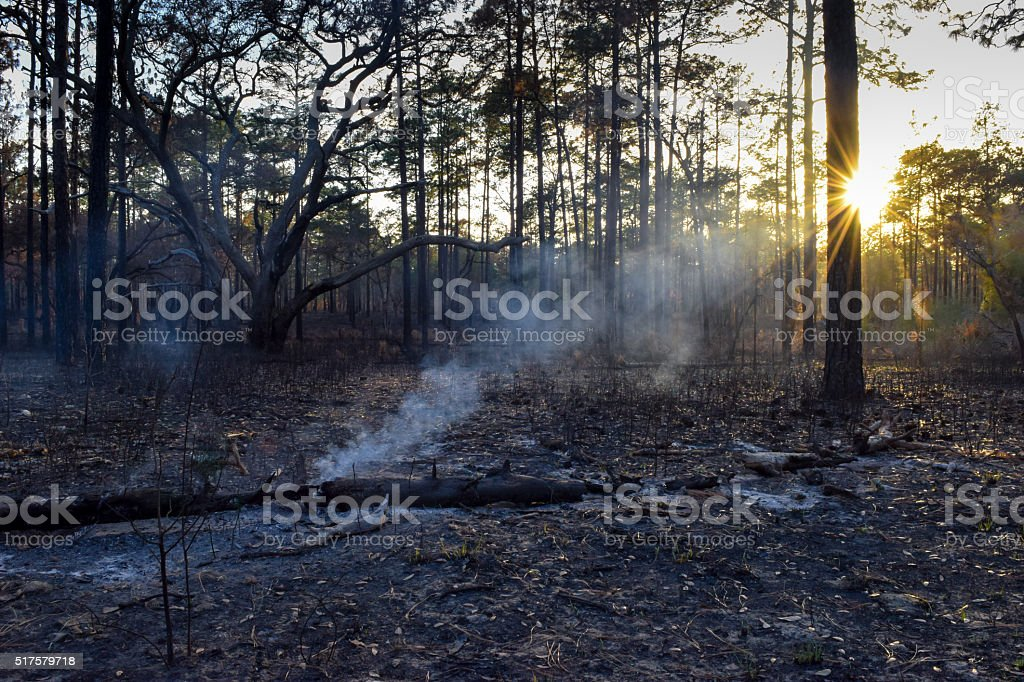 Forest Fire and Sunbeam stock photo
