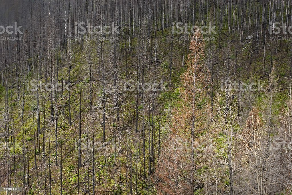 Forest Fire Area royalty-free stock photo