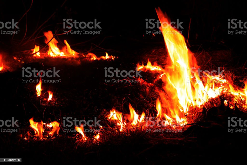 Forest Fire At Night Stock Photo Download Image Now Istock
