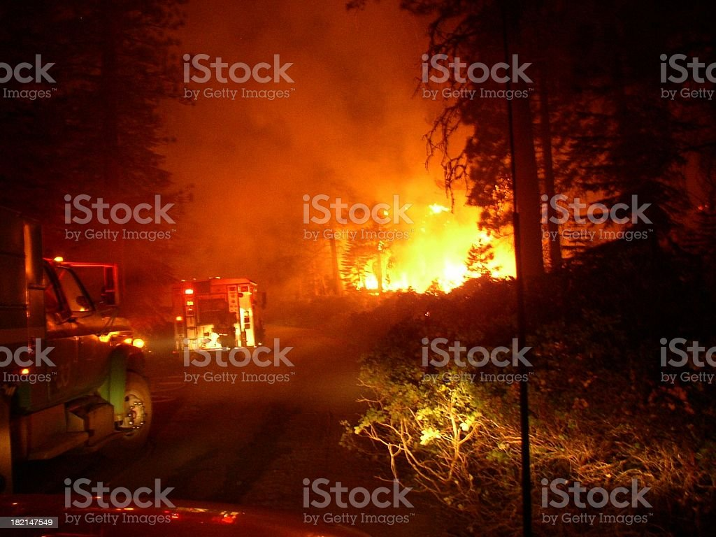 forest fire at night stock photo