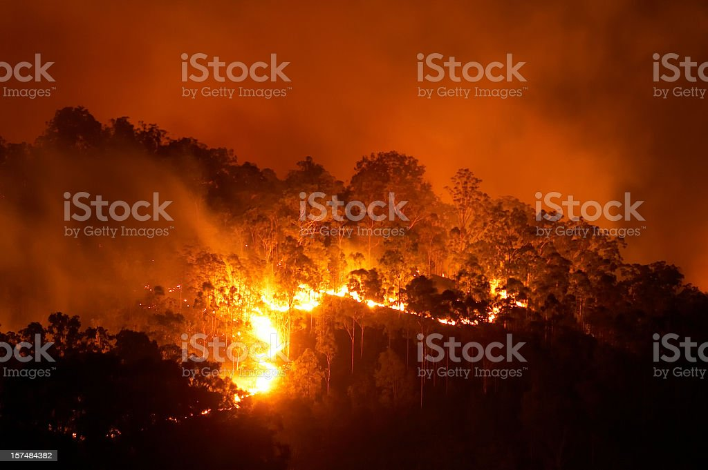 Forest fire at night with bright flames stock photo