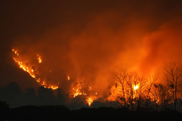 Forest Fire at Night.Wildfire burning forest trees in the mountain.Wildfire caused by humans. stock photo