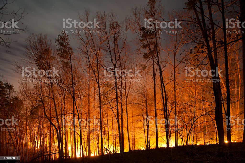 Forest Fire Burning at Night stock photo
