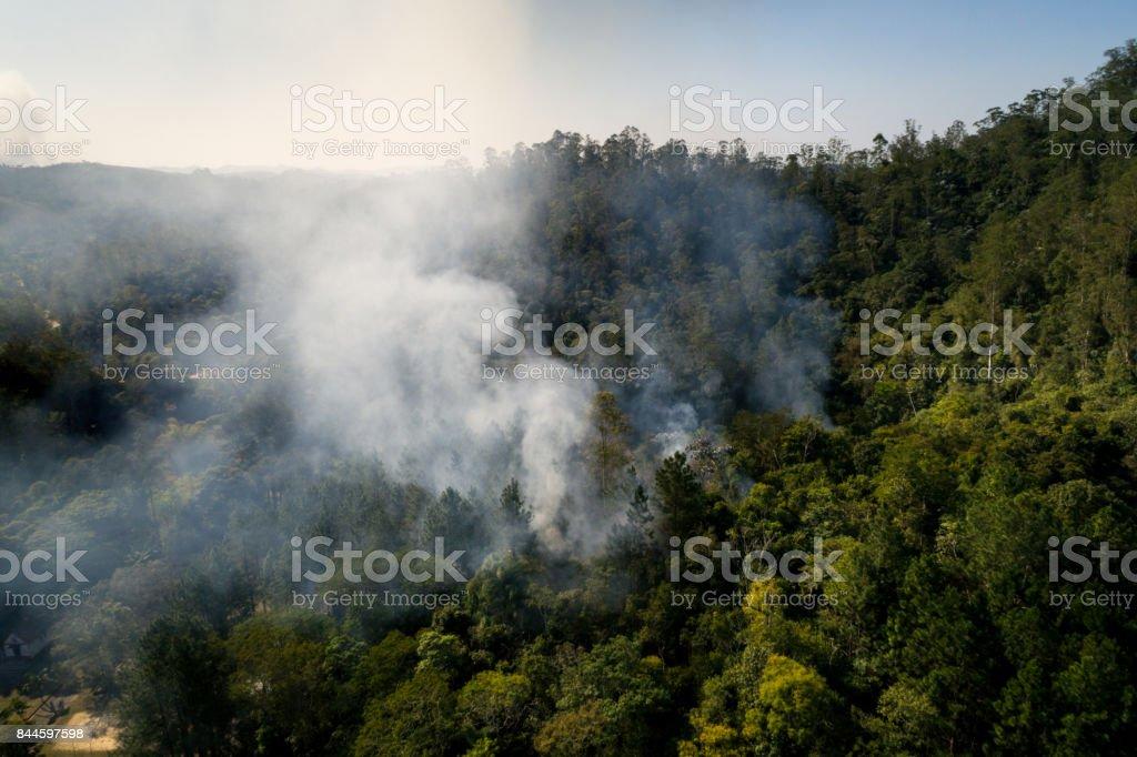 Fogo - queimando a antena de árvore da floresta - foto de acervo