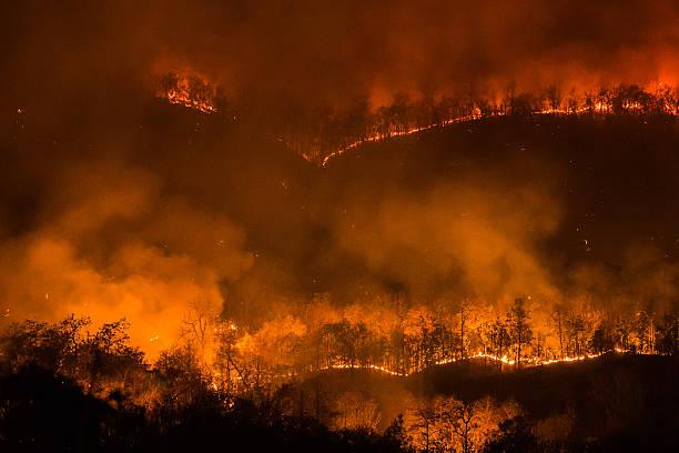 forest fire burning, wildfire at night. - bosbrand stockfoto's en -beelden