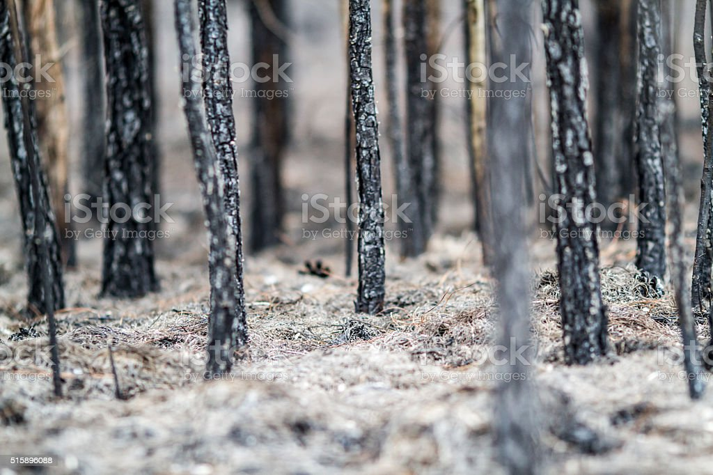 Forest Fire: Burnt stock photo