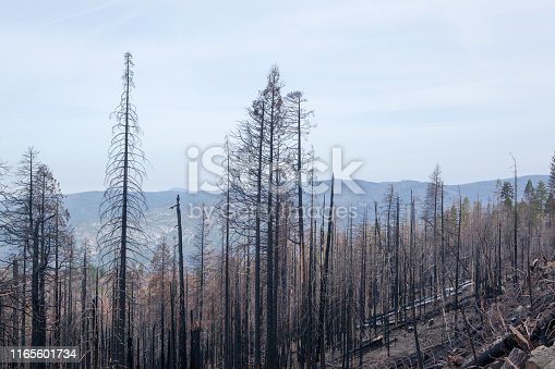 Forest fire damage in Yosemite National Park, California, USA.