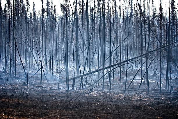 Forest fire damage with smoke. stock photo