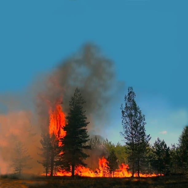 Forest fire disaster for environment, Threat of large fires. Uncontrolled spread of fire for forest land. smoke jumper stock pictures, royalty-free photos & images