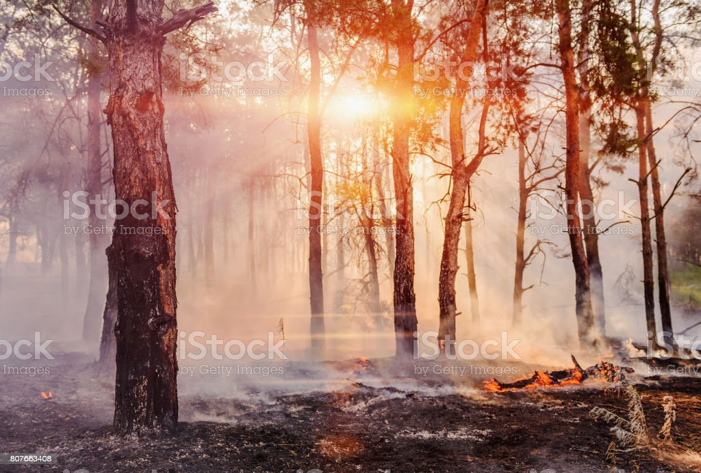 Forest fire. fallen tree is burned to the ground a lot of smoke when vildfire. stock photo