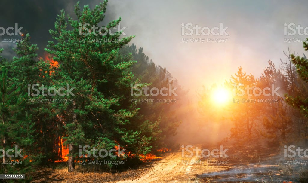 forest fire. firefighters to extinguish the fire. wildfire stock photo
