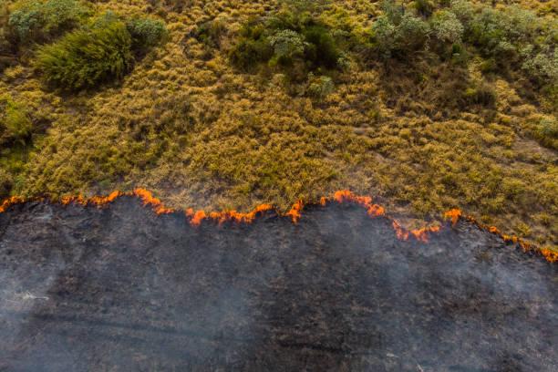 bosbrand in brazilië-klimaatverandering - klimaat stockfoto's en -beelden