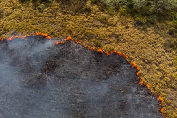 bosbrand in brazilië - bosbrand stockfoto's en -beelden