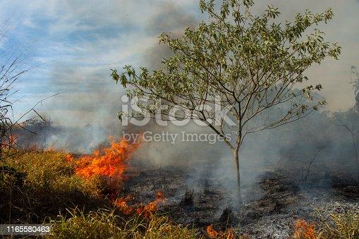 Burning pasture in Brazil on dry season