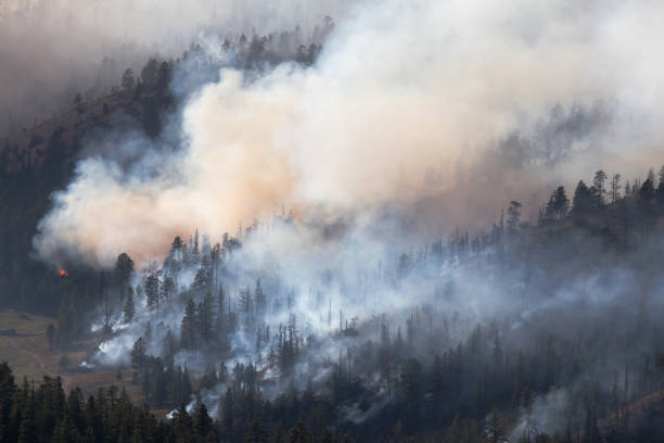 Forest Fire in Dixie National Forest stock photo