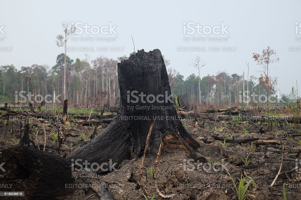 Forest Fire in Tesso Nilo Sumatera Indonesia stock photo