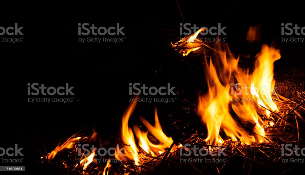 Forest Fire in the Night stock photo