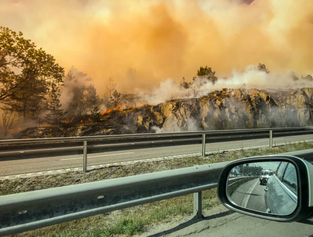 Forest fire near road or hightway seen from car. stock photo