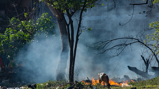 Fire burning and a goat tries to cross