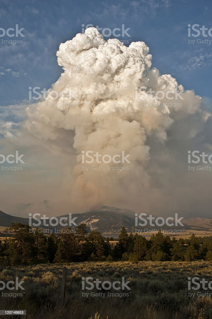 Forest Fire! stock photo