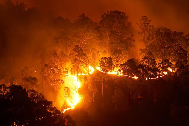 forest fire - bosbrand stockfoto's en -beelden