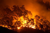istock Forest fire 157478614