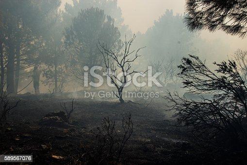 Forest Fire, Slash And Burn, Inferno, Burnt