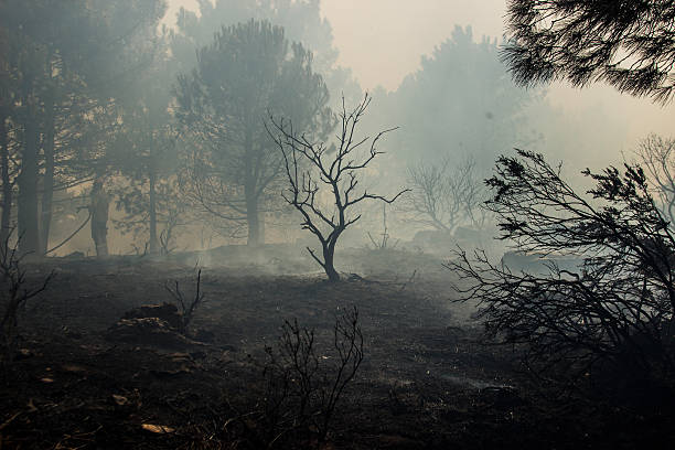 forest fire Forest Fire, Slash And Burn, Inferno, Burnt fire natural phenomenon stock pictures, royalty-free photos & images