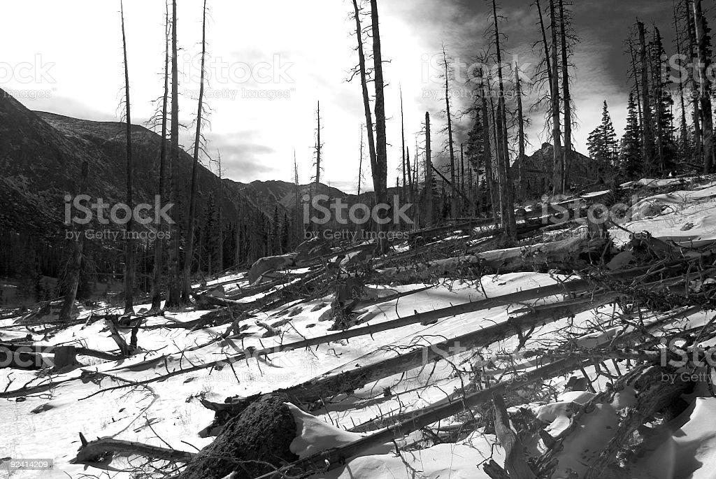 Incendio forestal - foto de stock